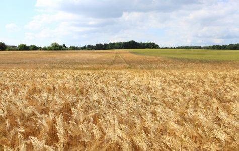 Farm Fresh – Environmental #3