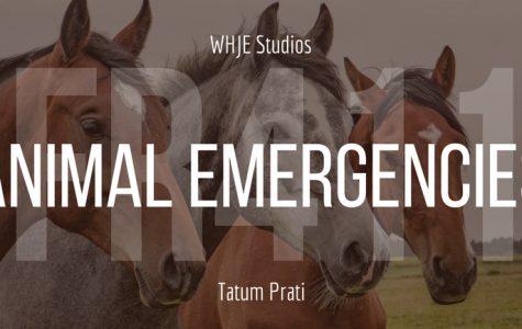 Animal Emergencies - FR411 #17