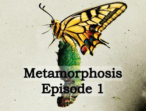 Maggie Ernst - Metamorphosis 1