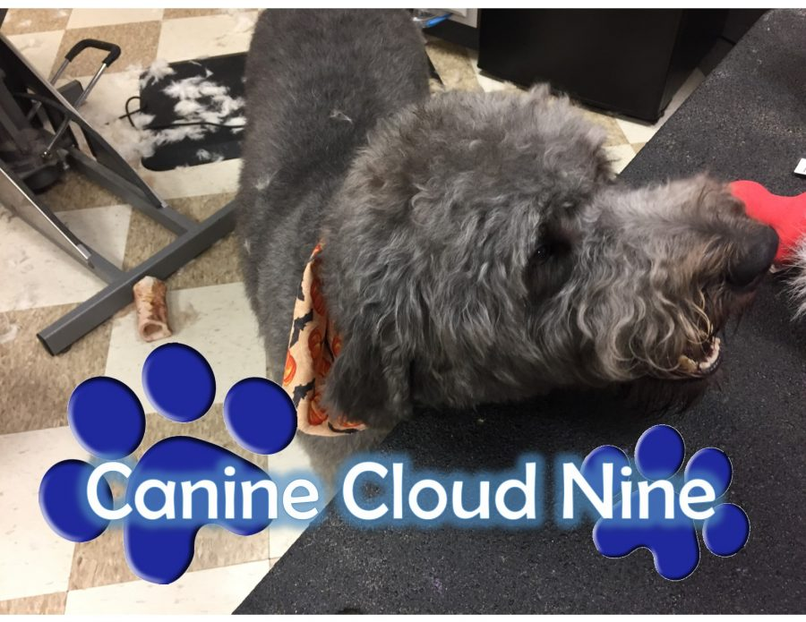 Canine+Cloud+9+-+MainStreet+%234