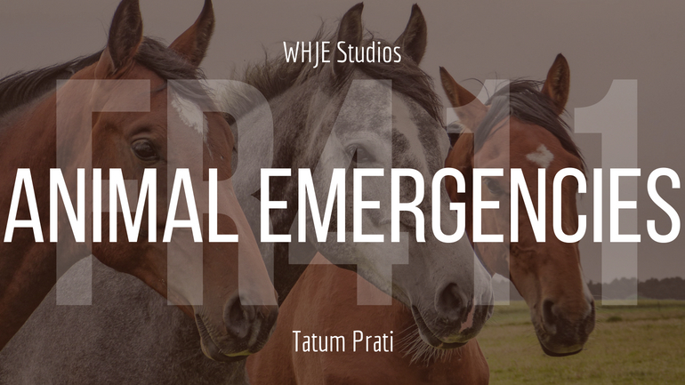 Animal+Emergencies+-+FR411+%2317